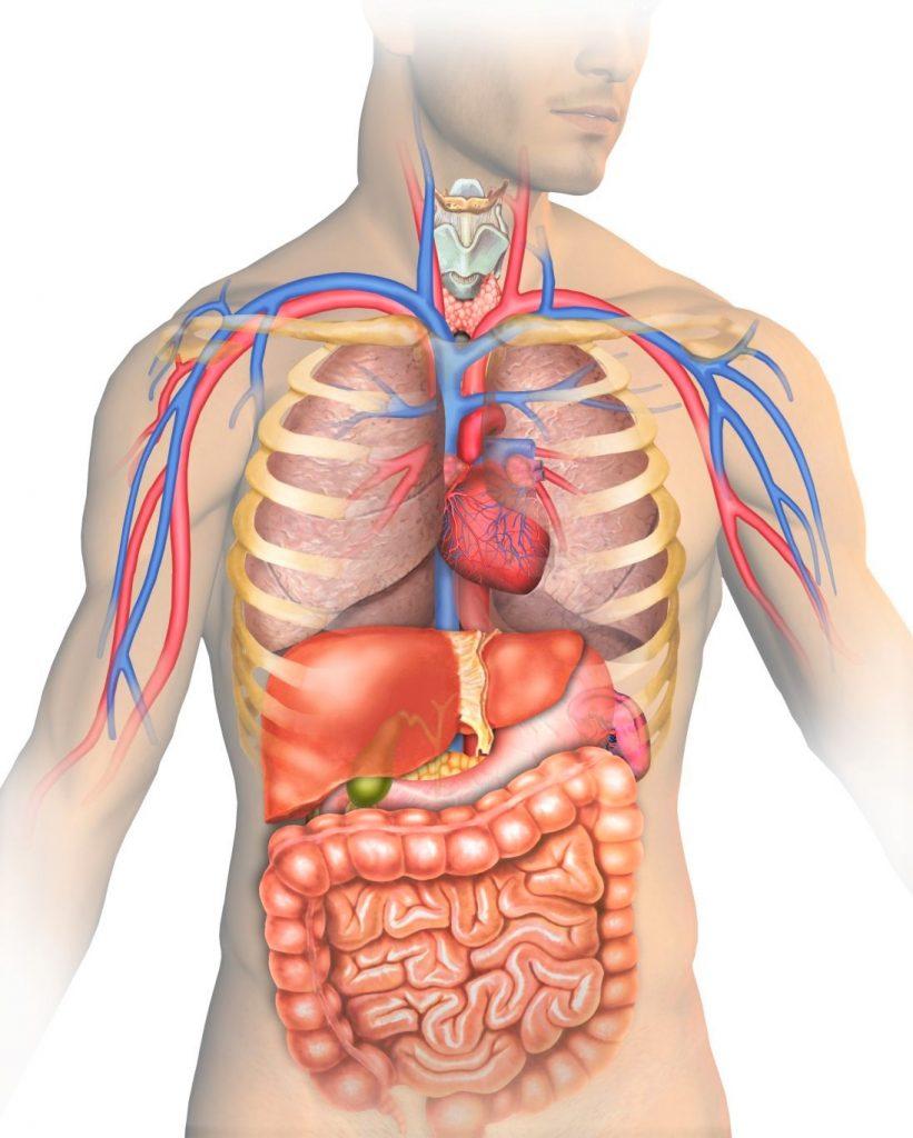razstrupljanje črevesja in Zaper Zaperino terapija za uničevanje parazitov