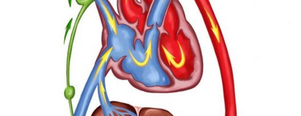 krvni obtok
