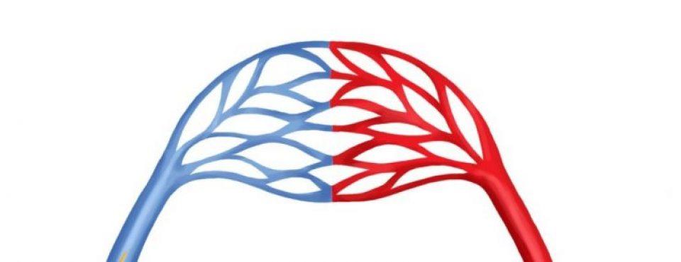 krvni obtok – kapilare