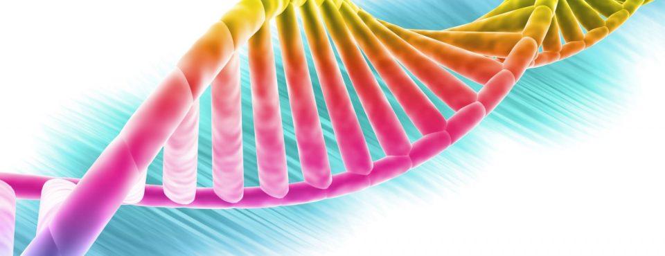 DNK dinamika genov in zaper