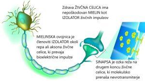 Multipla skleroza potrebuje zdrav MIELIN - Tesla-Zaper-Geo terapija, Delta Ocean