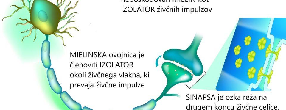 Multipla skleroza rabi zdrav MIELIN Tesla-Zaper-Geo terapija Delta Ocean