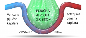 Kisik v možgane - pljučne alveole - Schumannovi geo impulzi Bionis in Zaper Zaperino