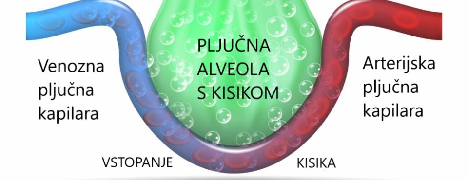 Kisik v možgane – pljučne alveole – Schumannovi geo impulzi Bionis in Zaper Zaperino