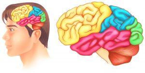 kisik v možgane in geo impulzi Bionis