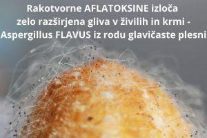 Rakotvorni aflatoksini - izloča jih gliva Aspergillus FLAVUS - Zapper Zaper Zaperino uniči parazite