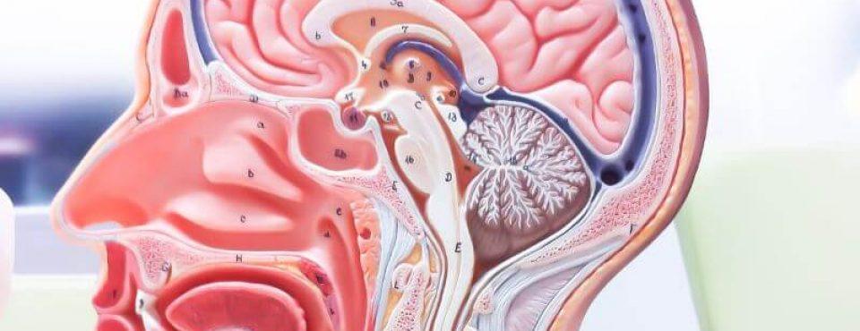 Nosna sluznica se krepi z beta karoteni, Zapper Zaper Zaperino pa uniči parazite